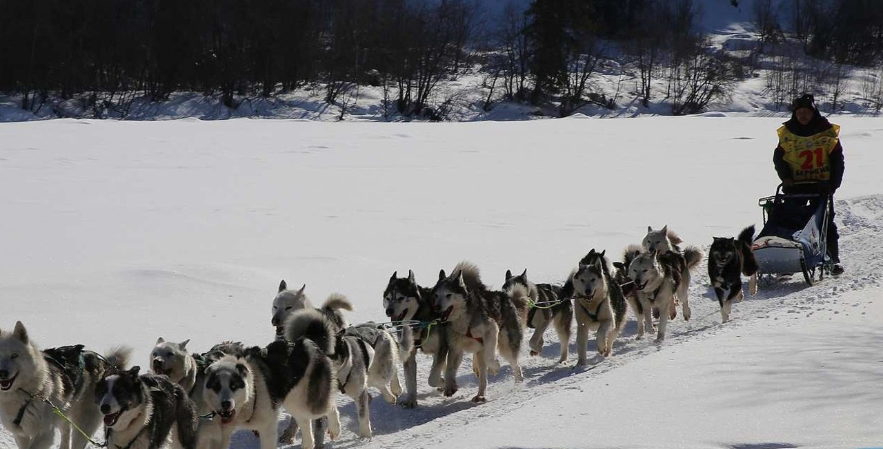 Берингия - Гонка на собачьих упряжках