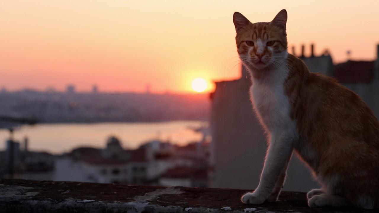 Стамбул - город кошек и древней истории