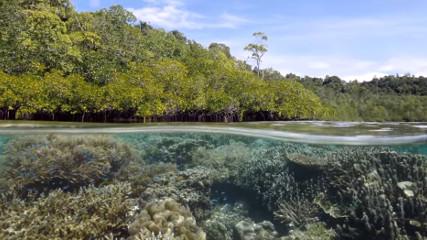 Острова Раджа-Ампат (Рай для туриста)