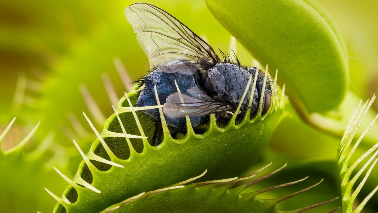 Растения питающиеся животными!