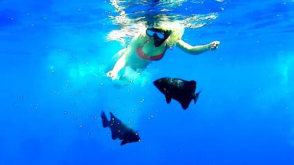 Аква Мастер: Подводная охота и отдых в Египте