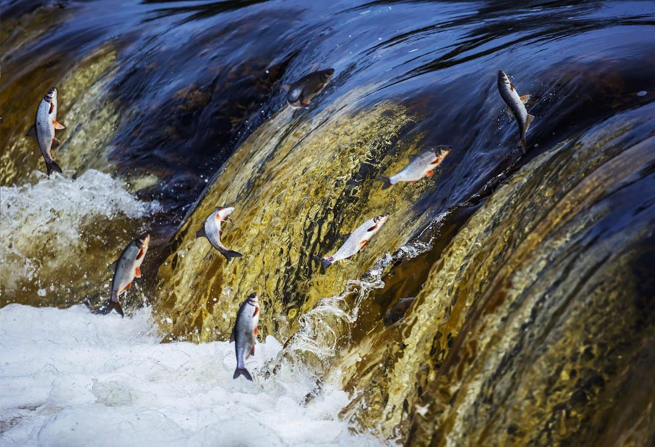 Весенний нерестовый запрет на ловлю рыбы