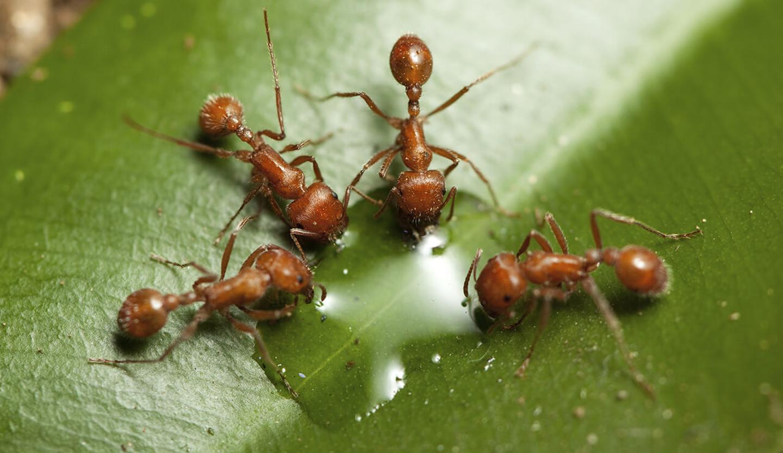 Муравей и муравейник