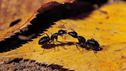 Муравей и муравейник (Анатолий Захаров)