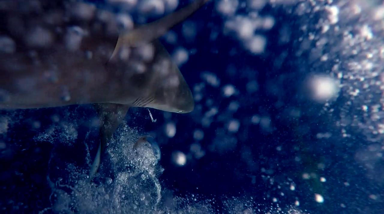 Нападение акул на подводного охотника на острове Вознесения